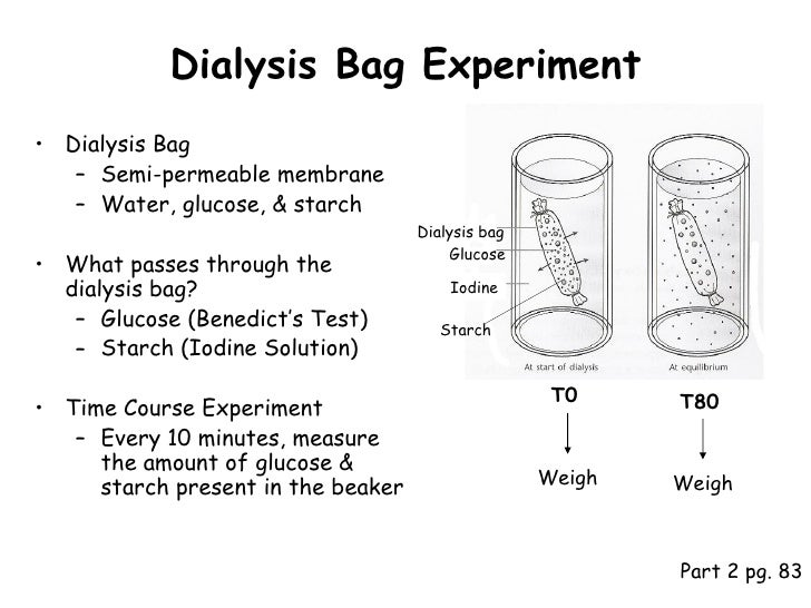 osmosis experiment plan Overview of lesson plan: in this lesson, students experiment to discover   investigate the effects of salinity on plant tissue and how osmosis.