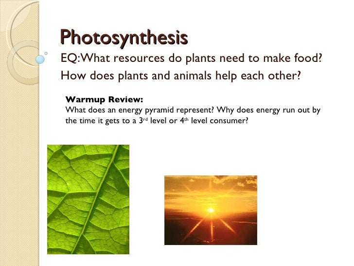Photosynthesis EQ:What resources do plants need to make food? How does plants and animals help each other? Warmup Review: ...