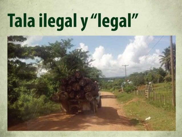 Reducir la explotación de los recursos naturales  Cero deforestación  Derecho de las comunidades indigenas  Economía fores...