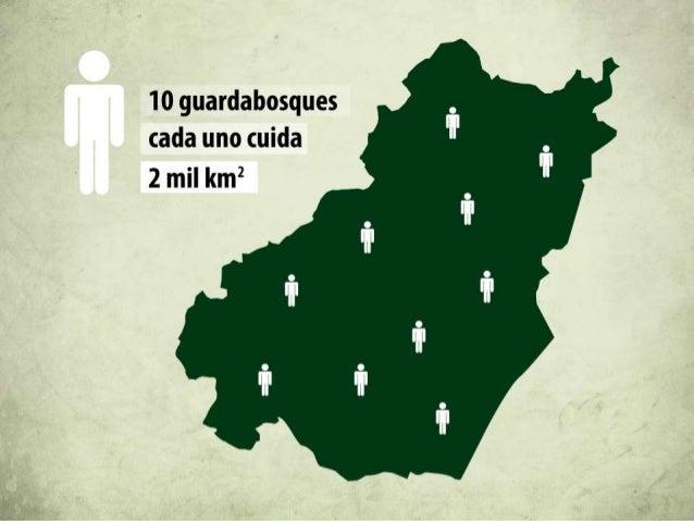 Deforestación anual en Costa Rica  66,000 Ha  3000 Ha 1970-1980 2000