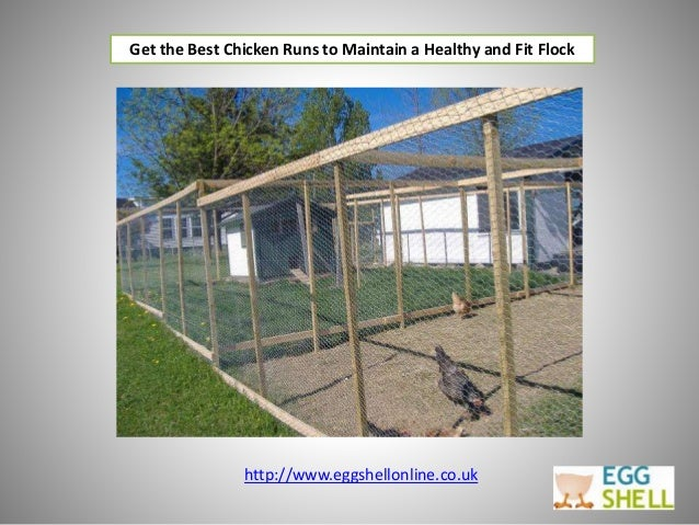 Get the Best Chicken Runs to Maintain a Healthy and Fit Flock http://www.eggshellonline.co.uk