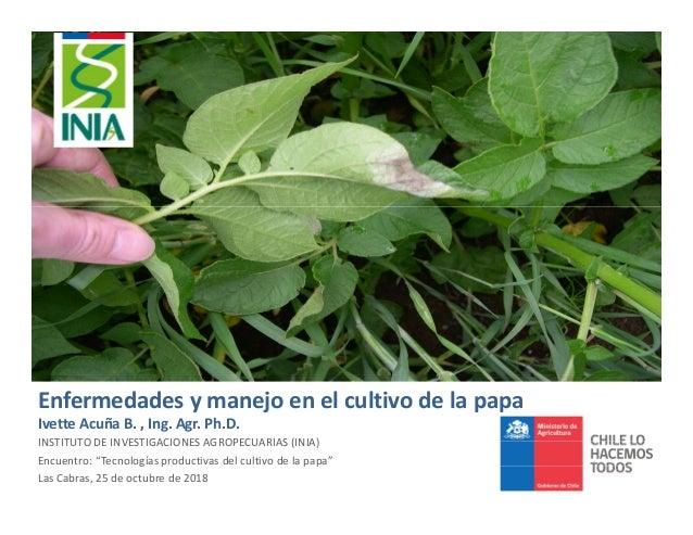 Enfermedades y manejo en el cultivo de la papa Ivette Acuña B. , Ing. Agr. Ph.D. INSTITUTO DE INVESTIGACIONES AGROPECUARIA...
