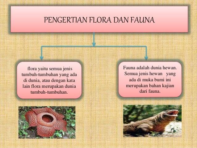 Wawasan Kemaritiman Flora Fauna