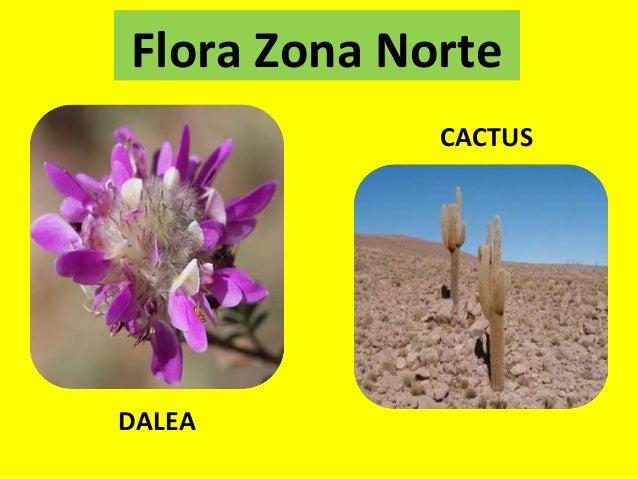 Ppt Flora Fauna Y Paisajes Por Zonas