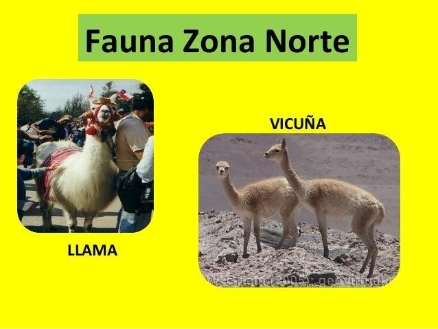 Ppt flora fauna y paisajes por zonas for Piletas publicas en zona norte