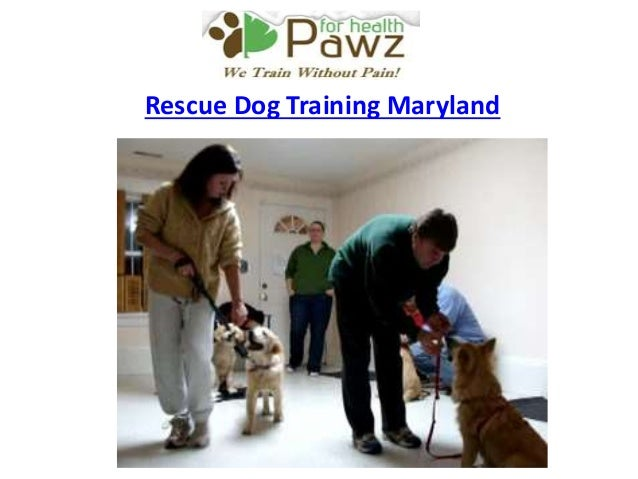 how to train your dog to search and rescue