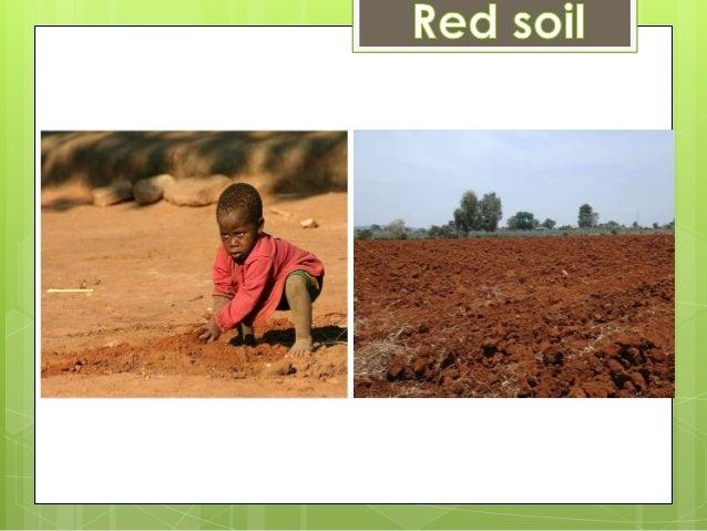 Soil and soul pdf free