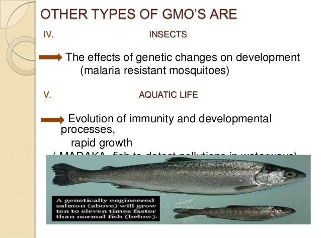genetically modified salmon essay Salmon v salmon genetically modified salmon have been modified by integrating the growth hormone regulating gene from farm-raised salmon essay.