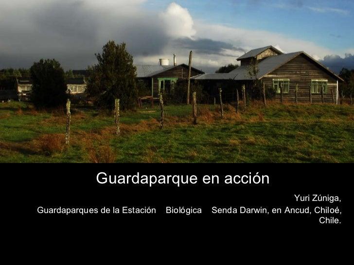 Guardaparque en acción Yuri Zúniga, Guardaparques de la Estación  Biológica  Senda Darwin, en Ancud, Chiloé, Chile.