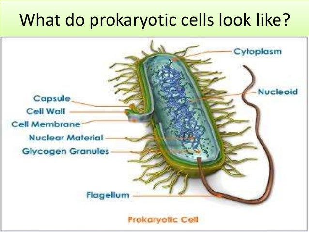 Eukaryotic And Prokaryotic Cells