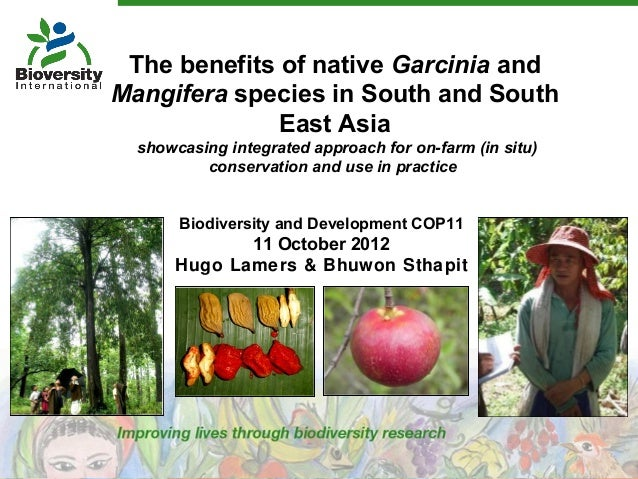 Biodiversity and Development COP11 11 October 2012 Hugo Lamers & Bhuwon Sthapit The benefits of native Garcinia and Mangif...