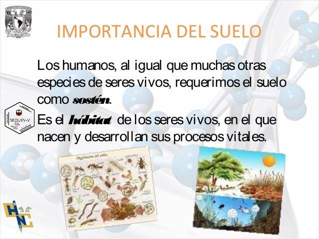 Ppt importancia del suelo 1 con apunte for Importancia de los suelos