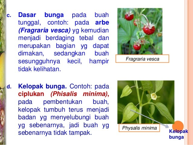 Morfologi Bunga Biji Buah