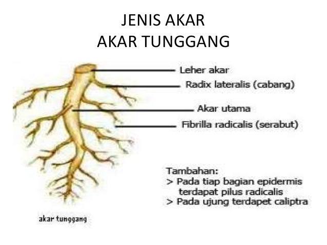 Fungsi Organ Tumbuhan