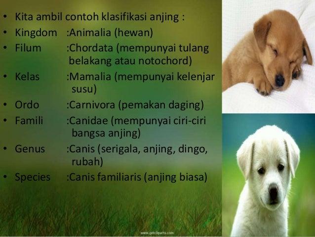 Klasifikasi Hewan Dan Penggolongan Dunia Hewan