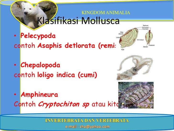 Image of: Platyhelminthes Kingdom Animalia Klasifikasi Informazone Ppt Kngdom Animal