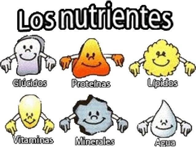 Los principales nutrientes son:  • Las proteínas.  • Los glúcidos.  • Los lípidos.  • Las sales minerales.  • Las vitamina...