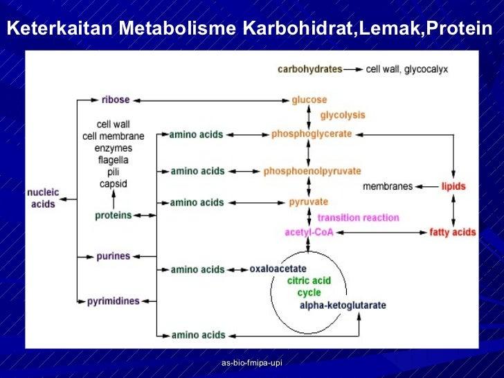 Pengertian dan Fungsi Metabolisme Karbohidrat, Lemak dan Protein Enzim