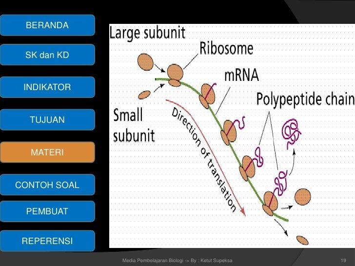 Mikro Teaching Sintesa Protein Supeksa