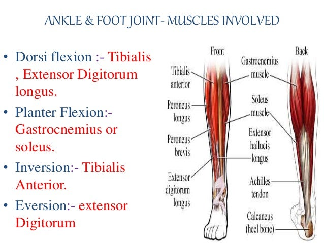 fundamental movement of joint kinesiology 14 638