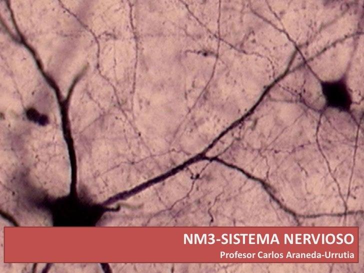 NM3-SISTEMA NERVIOSO<br />Profesor Carlos Araneda-Urrutia<br />