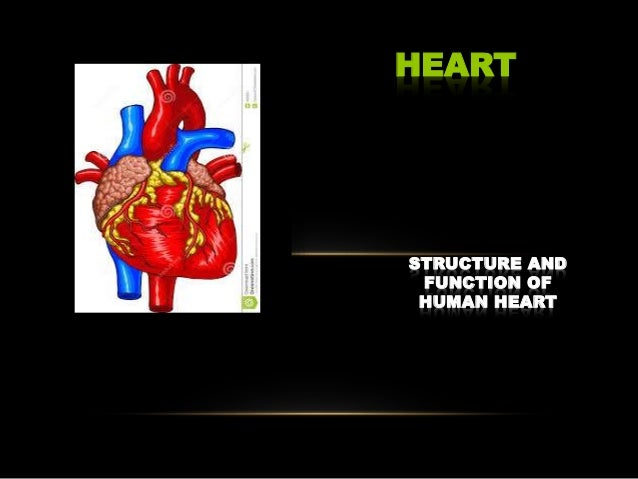 STRUCTURE AND FUNCTION OF HUMAN HEART HEART