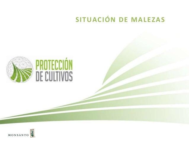 SITUACIÓN DE MALEZAS