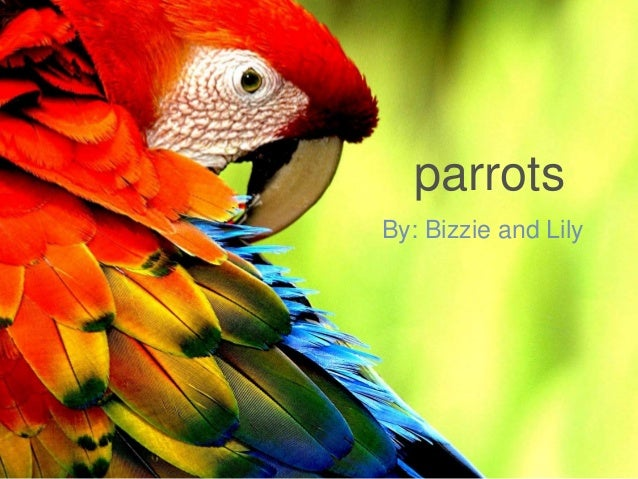 parrots By: Bizzie and Lily