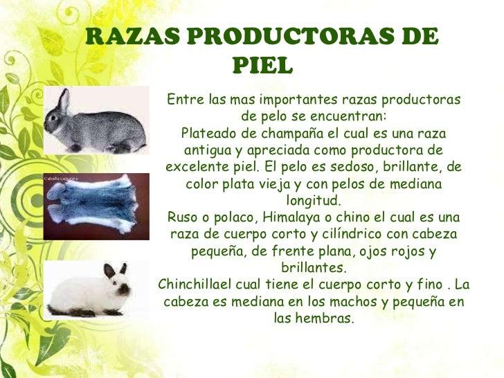 MIL ANUNCIOS.COM - Compra venta de conejos en Vizcaya
