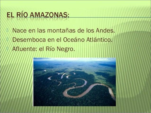 Proyecto La Selva Amaz Nica