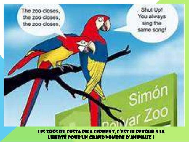 Les Zoos du Costa Rica ferment, c'est le retour a la liberté pour un grand nombre d'animaux !