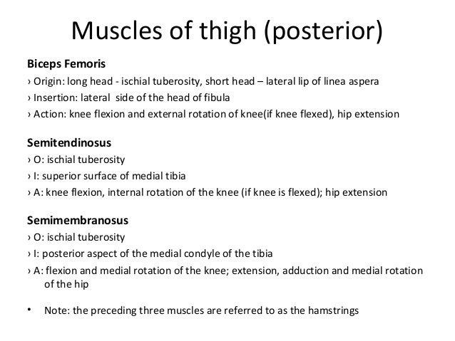 Ppt slides anatomy quadratus femoris 35 ccuart Images
