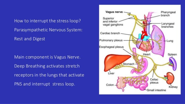 deep breathing exercises for stress reduction