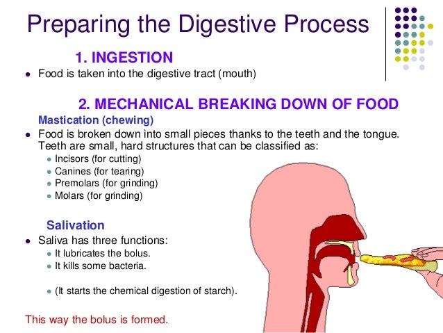 a description of the processes in digesting the food we eat Digesting food [richard walker] -- discusses how the digestive system processes food for growth schema:description  body processes the food we eat.