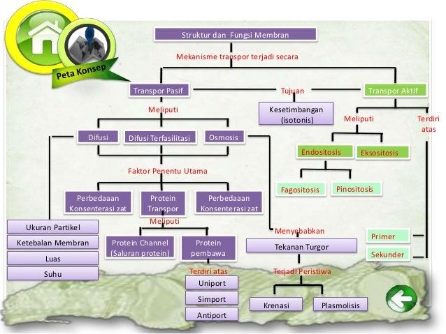 Transpor Pasif (Difusi, Osmosis, dan Difusi Terfasilitasi)