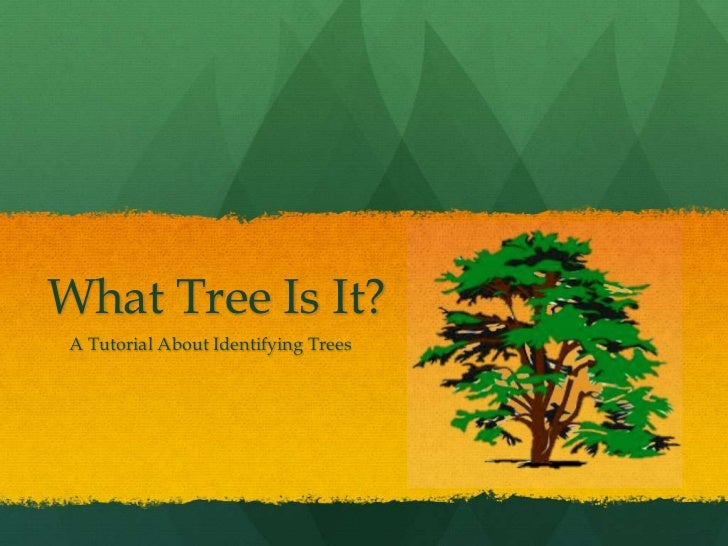 What Tree Is It?<br />    A Tutorial About Identifying Trees<br />