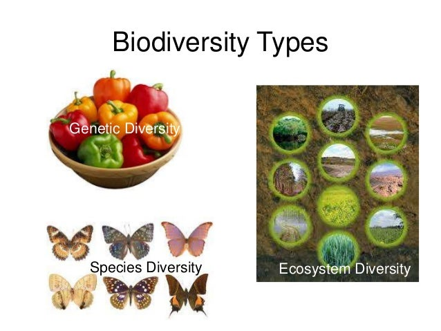 origin of diversity within species Diversity definition, the state or fact of being  the inclusion of individuals representing more than one national origin, color, religion, socioeconomic.