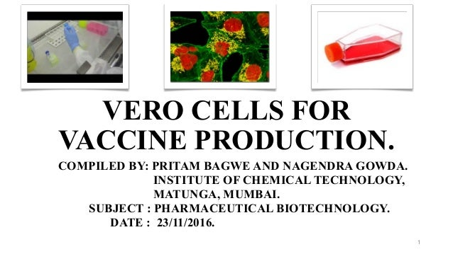 VERO CELLS FOR VACCINE PRODUCTION. 1 COMPILED BY: PRITAM BAGWE AND NAGENDRA GOWDA. INSTITUTE OF CHEMICAL TECHNOLOGY, MATUN...