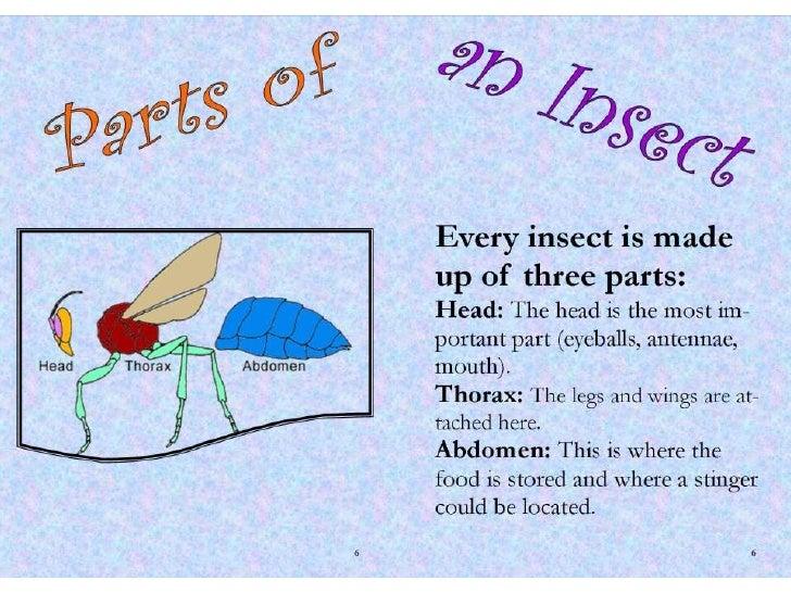 Emily's Bug Book