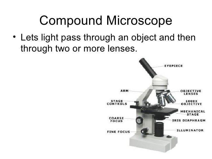 different types of microscopes There are three main categories of microscopes: electron, confocal, and compound microscopes electron microscopes are used.