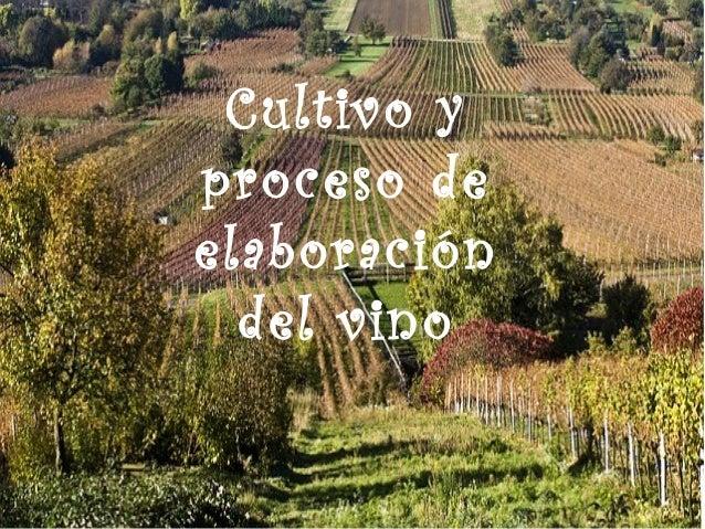 Cultivo y proceso de elaboración del vino
