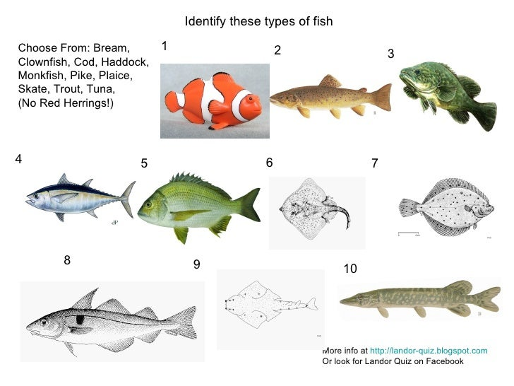 1 2 3 4 5 6 7 8 9 10 Identify these types of fish More info at  http://landor-quiz.blogspot.com Or look for Landor Quiz on...