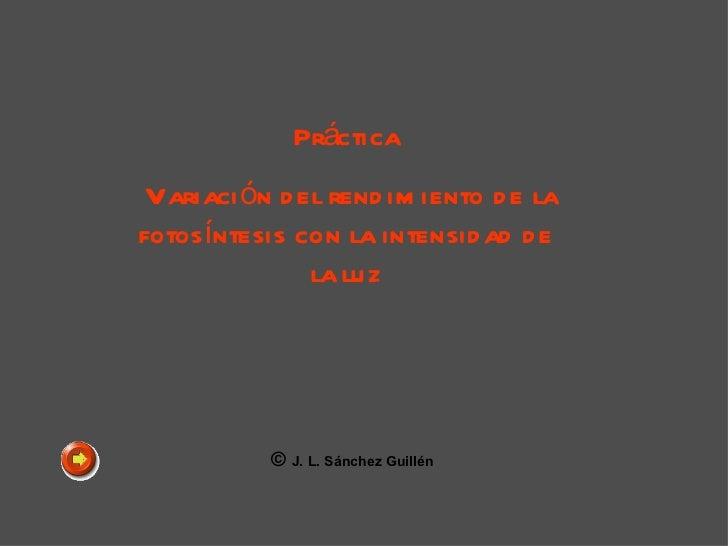 Práctica Variación del rendimiento de la fotosíntesis con la intensidad de la luz ©  J. L. Sánchez Guillén