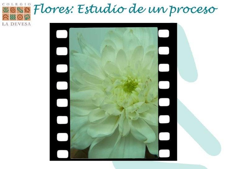 Flores: Estudio de un proceso<br />