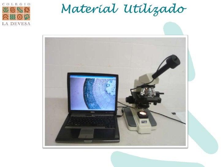 Material  Utilizado<br />