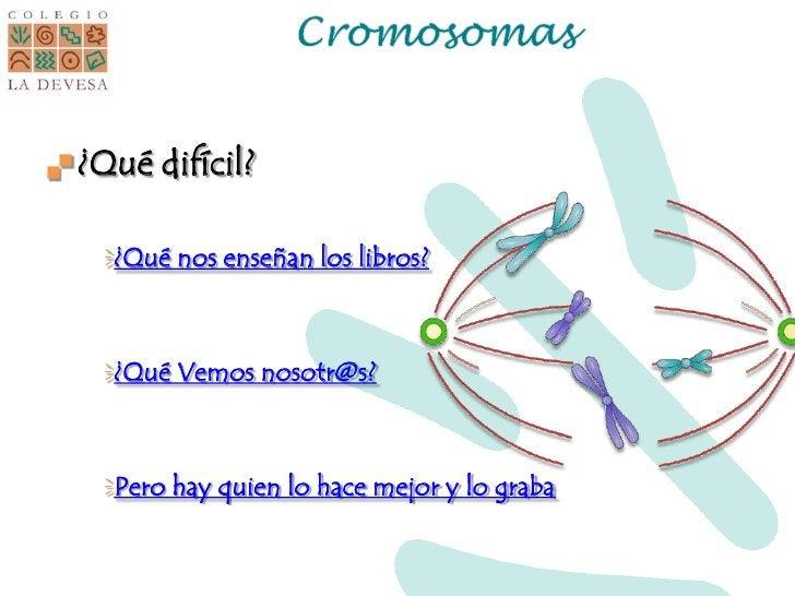 Cromosomas<br />¿Qué difícil?<br />¿Qué nos enseñan los libros?<br />¿Qué Vemos nosotr@s?<br />Pero hay quien lo hace mejo...