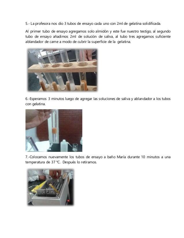 5.- La profesora nos dio 3 tubos de ensayo cada uno con 2ml de gelatina solidificada. Al primer tubo de ensayo agregamos s...