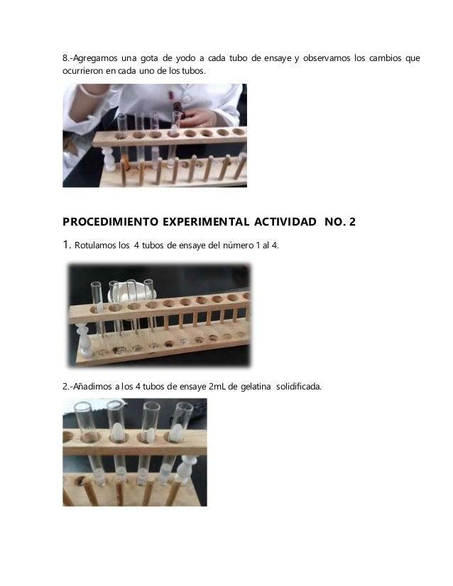 8.-Agregamos una gota de yodo a cada tubo de ensaye y observamos los cambios que ocurrieron en cada uno de los tubos. PROC...