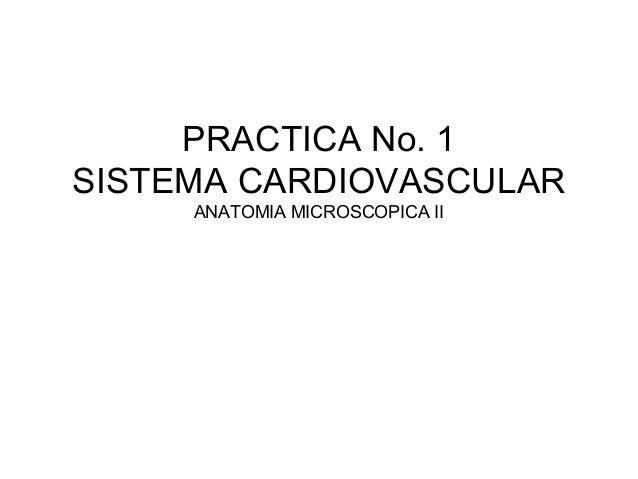 PRACTICA No. 1  SISTEMA CARDIOVASCULAR  ANATOMIA MICROSCOPICA II