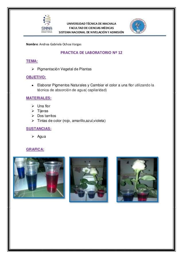 Practica 12 de la coloracion de una flor for Proyecto de investigacion de plantas ornamentales